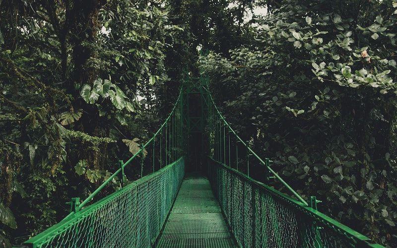 Image of green bridge in dark green jungle.