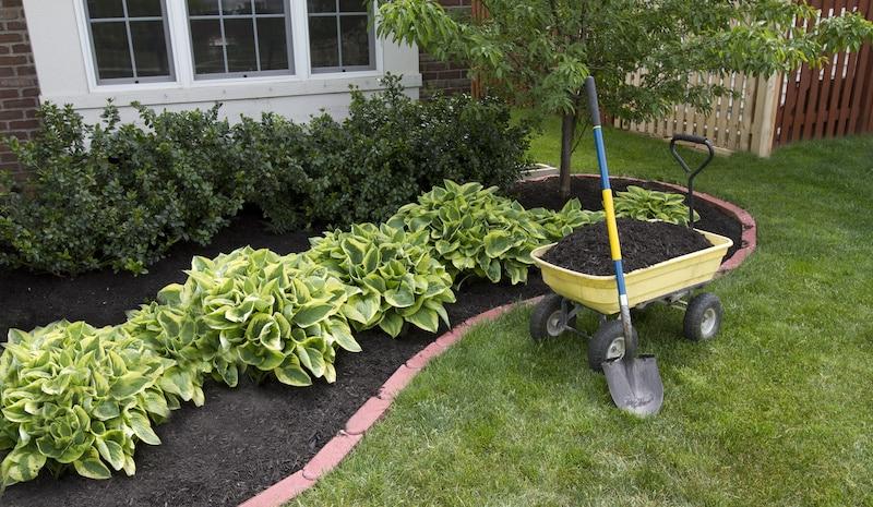 Image of backyard garden alongside home.