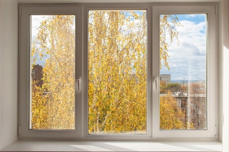 Image of window overlooking fall leaves.