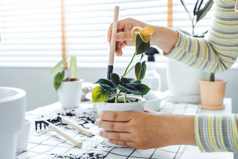 Person repotting small indoor plant.