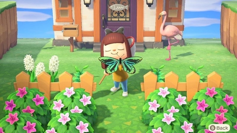 animal farm character catching a butterfly