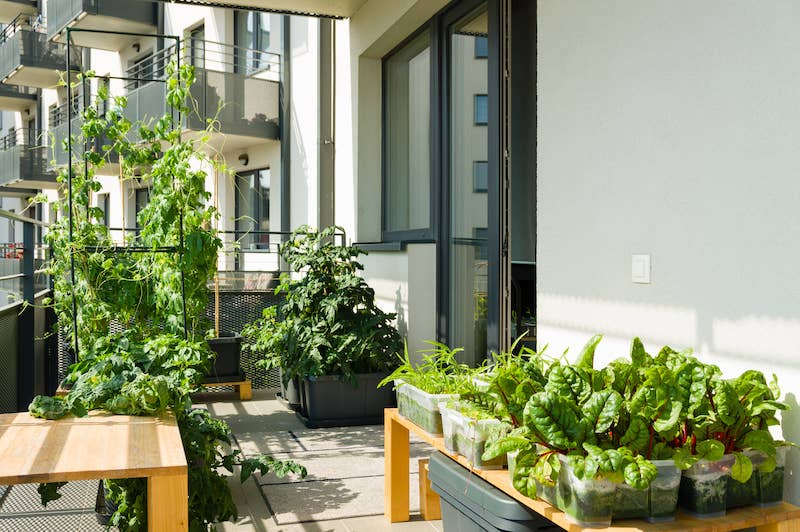 urban balcony garden with chard kangkung and other easy to grow vegetables