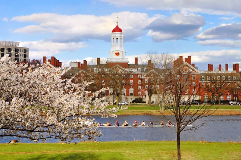 tree blooming on Harvard campus