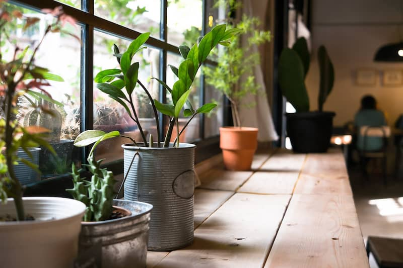 Plants on a windowsill in tin pots.