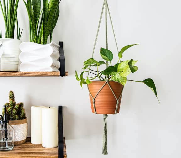 Hanging Philodendron In Macrame Plant Holder