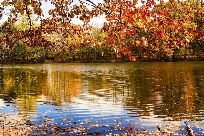 Birge Pond In Bristol