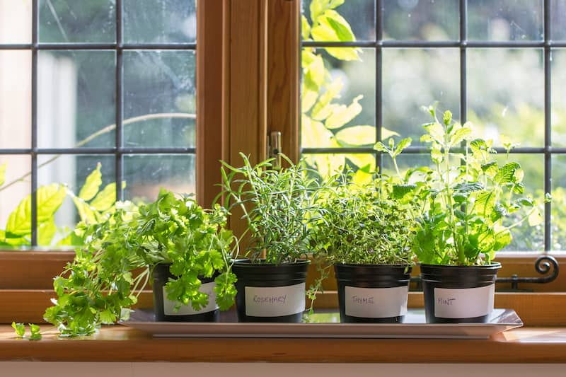 herbs in a window