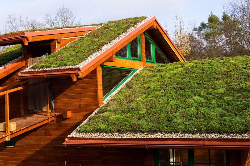 roof with grass growing on top