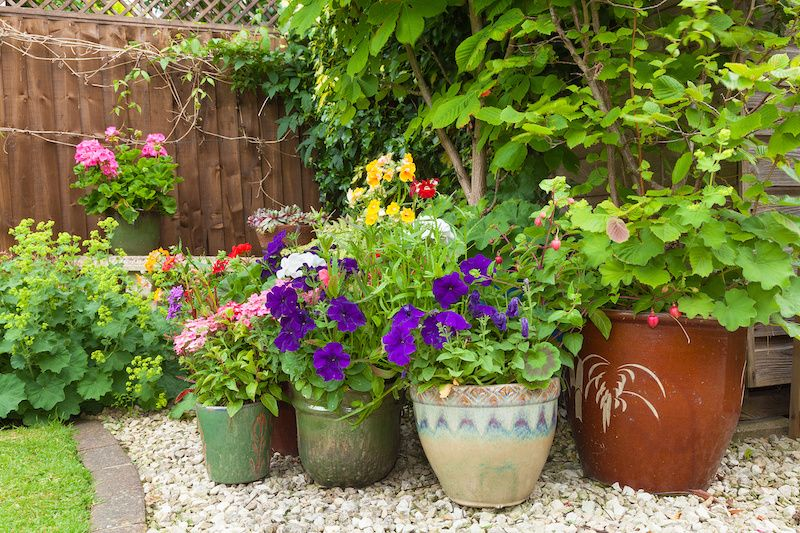 potted plants on gravel