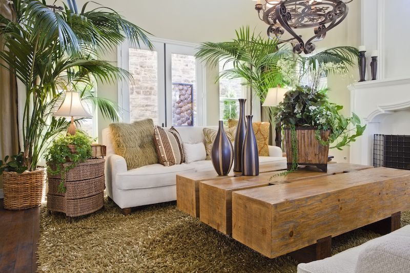 Safari themed living room with a variety of plants