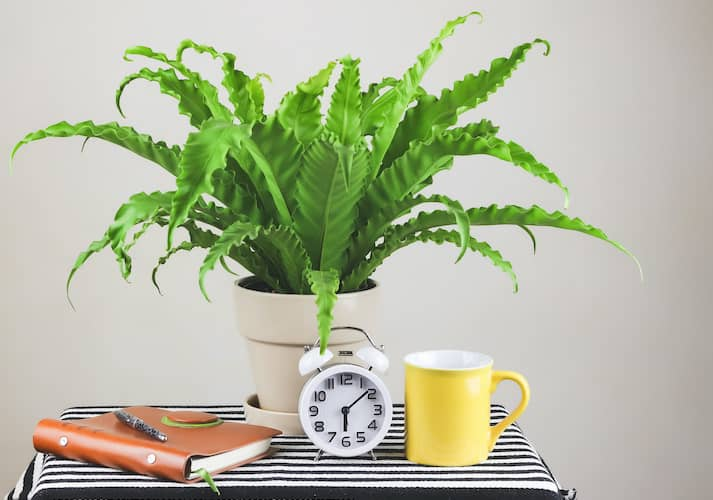 Potted Green Birds Nest Fern On Bed Side Table With Alarm Clock And Journal And Coffee Cup