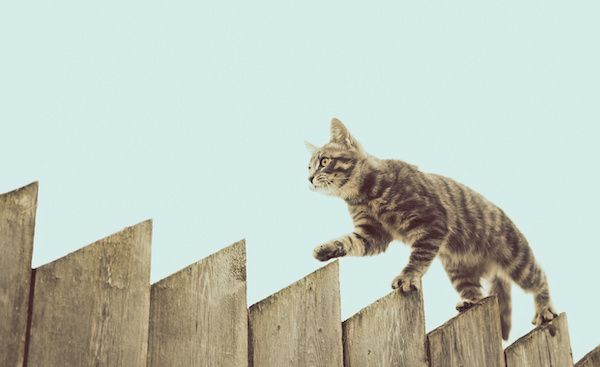 Cat outdoors walking on a fence.