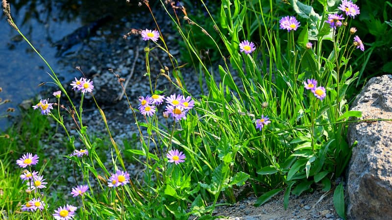 Native Plants For Rain Garden