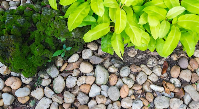 Variated Stones In Rock Garden With Moss And Green Plants