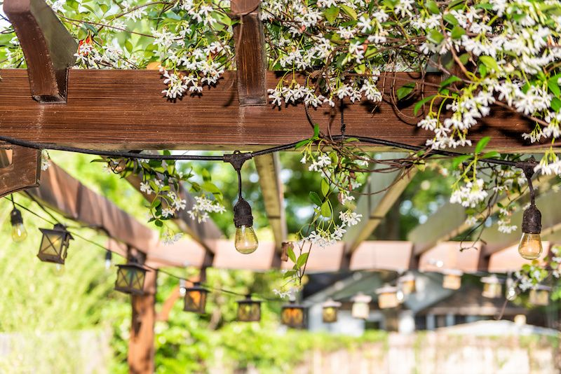 wood pergola with plants draped over