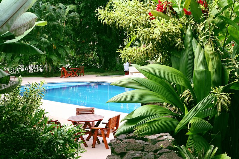 pool surrounded by tropical plants