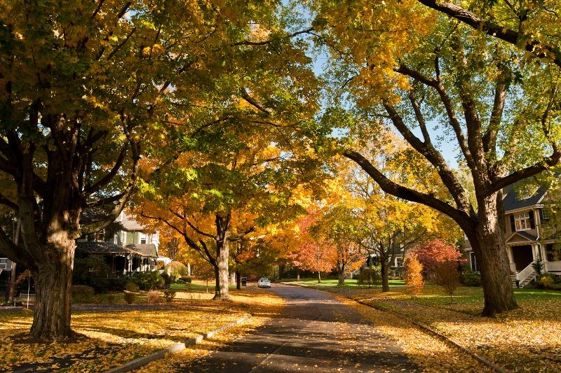 newton trees